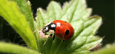 TheCropSite - Insect Guide