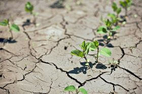 Understanding the Impact of El Niño on the World's Agriculture