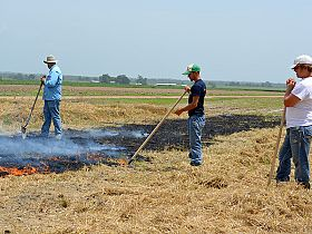 New findings share how prescribed fire, no-till impact soil microbes
