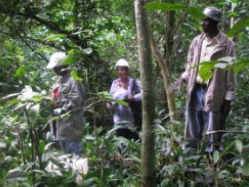 Climate-resilient wild coffee populations with great flavor potential discovered in Uganda