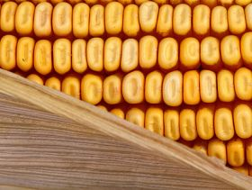 Improved Prospects for 2014 Brazillian Maize Crop
