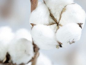 COVID-19 and recession cut cotton demand