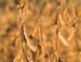 Climate Change Causing Losses for US Soybean Farmers
