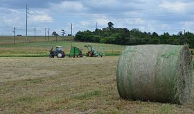 Texas Hay Supplies Range from Surplus to 'Non-existent'