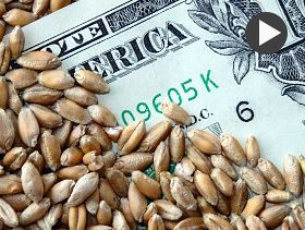 Market Analyst: Wheat Use, Corn Exports Fall